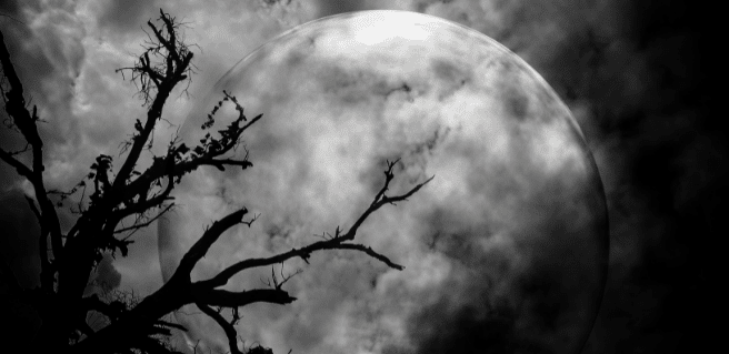 foggy nighttime moon behind tree picture