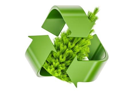 Christmas Tree Recycling Options Throughout Metro Atlanta