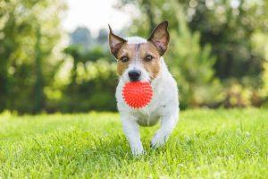 dog park playing ball