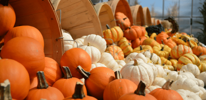 photo of pumpkins in the fall to promote fall events near southwyck homes communities